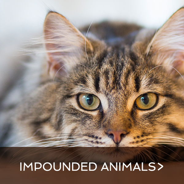 Impounded Animals